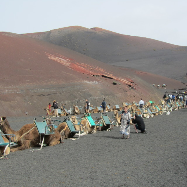 """camel train at Timanfaya, Lanzarote"" stock image"