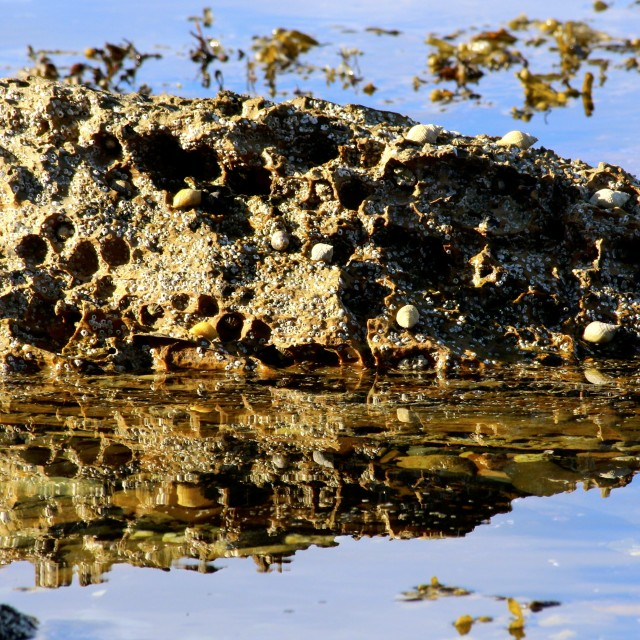 """Rock Reflections"" stock image"