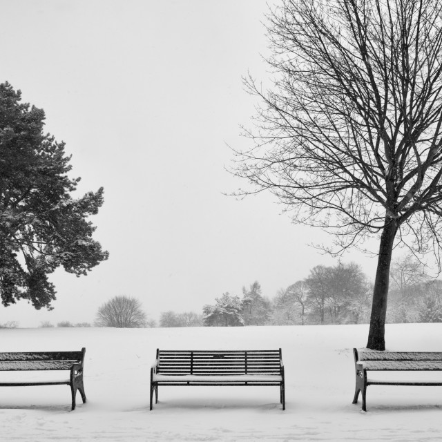 """""""Winter in the Park"""" stock image"""