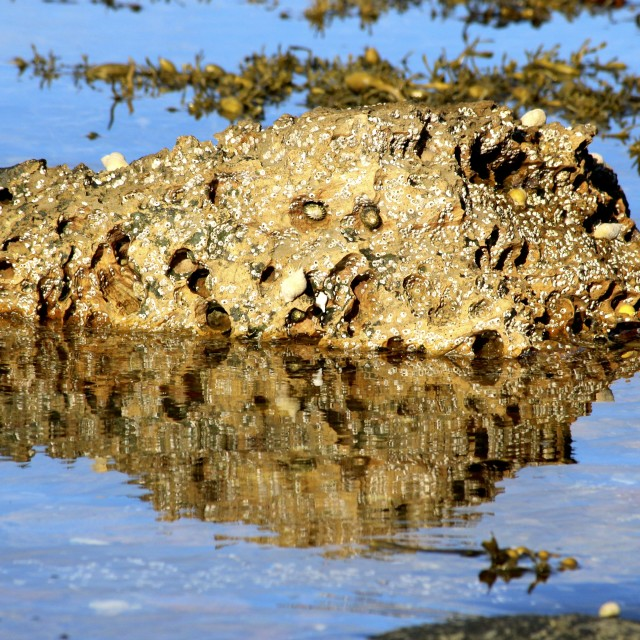 """Rock Reflections 3"" stock image"