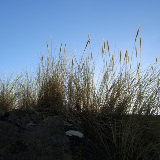 """Beach Dunes 2"" stock image"