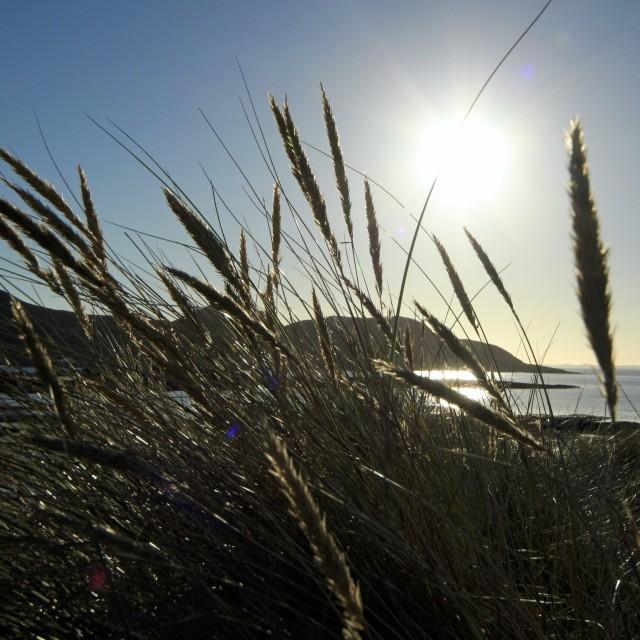 """Beach Dunes 3"" stock image"