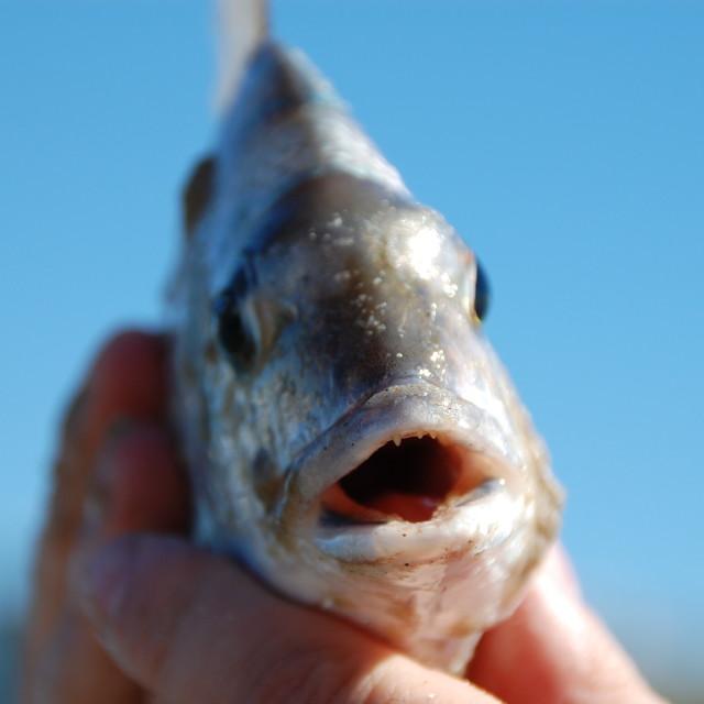 """Noosa Fishing"" stock image"