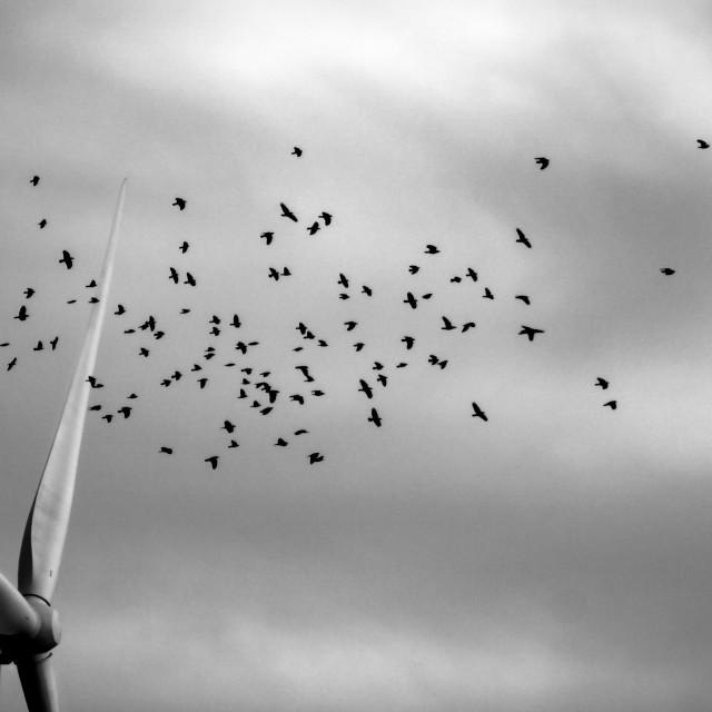 """""""The Swarm"""" stock image"""