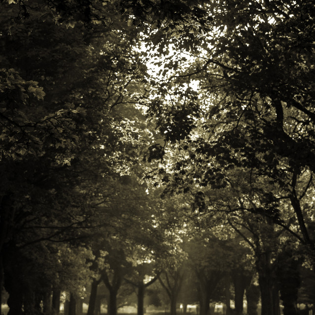 """Pickering Park"" stock image"