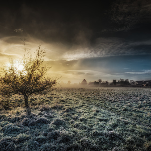 """A Lone Tree At Dawn"" stock image"