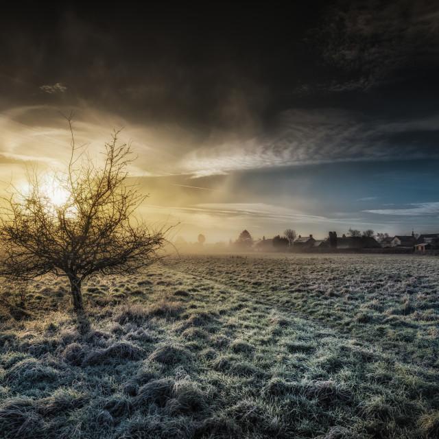 """A Lone Tree At Dawn"" stock image"