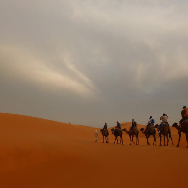 """""""Sahara camel trek"""" stock image"""