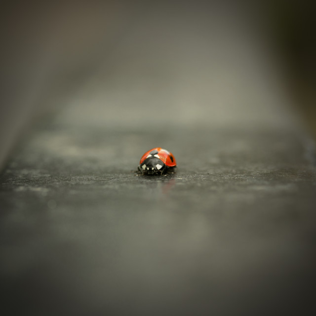 """Ladybird Squared"" stock image"