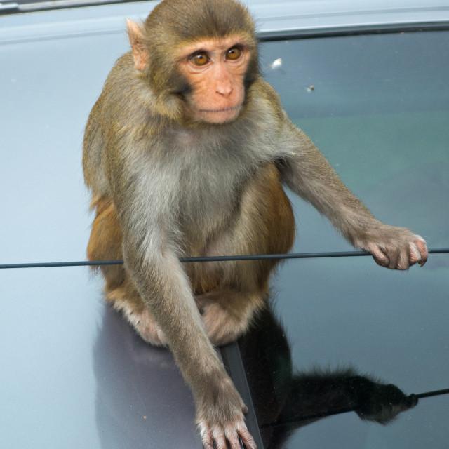 """""""Monkey Destruction"""" stock image"""