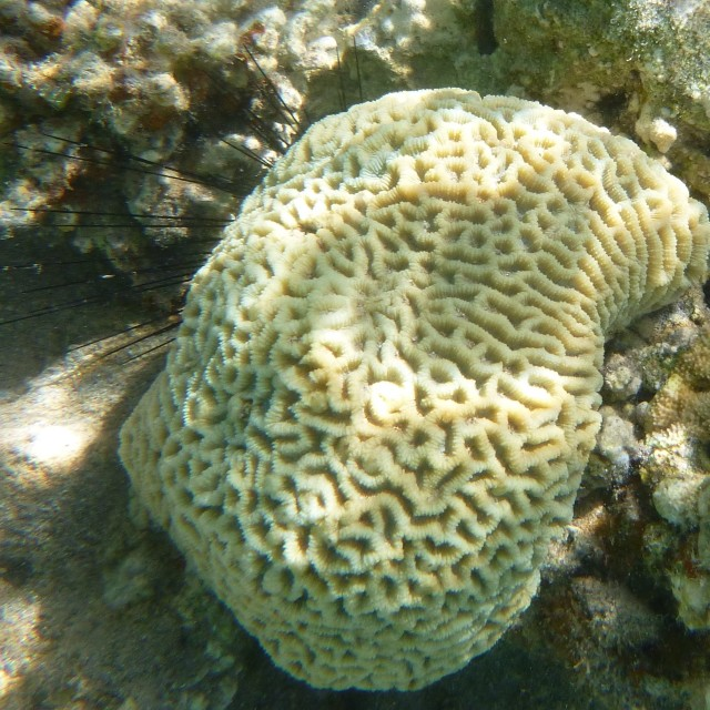 """Shy Sea Urchin"" stock image"
