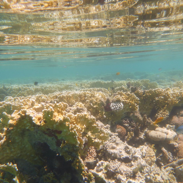 """Reeftop View"" stock image"
