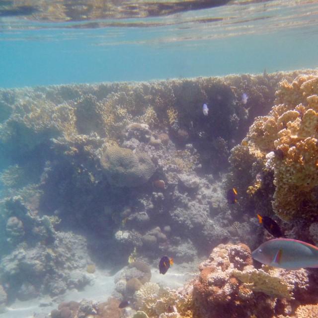 """""""Reeftop View II"""" stock image"""