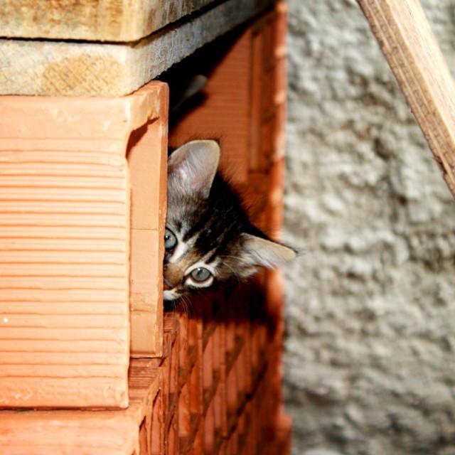 """""""Hidden Cat"""" stock image"""