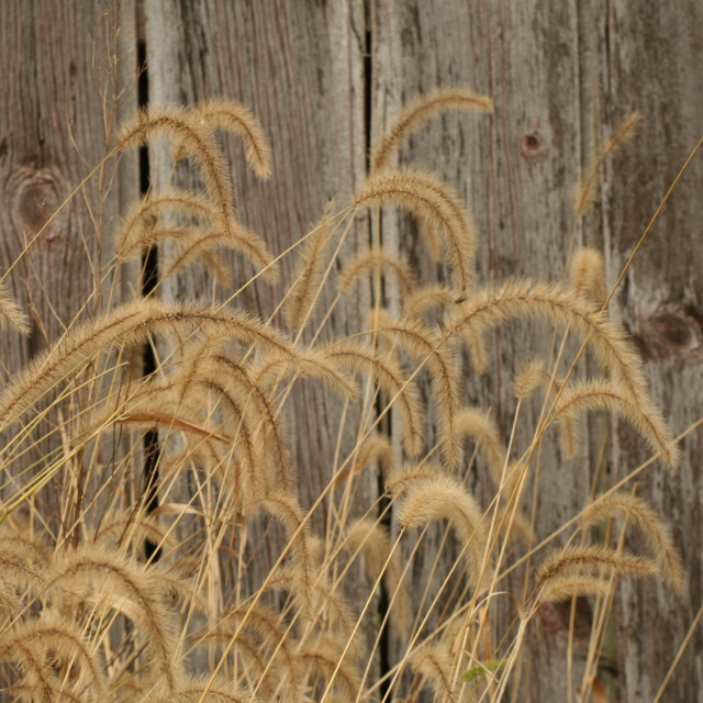 """Autumn grass in New Jersey"" stock image"