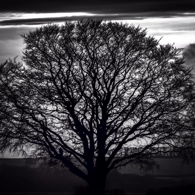 """Winter's Tree"" stock image"