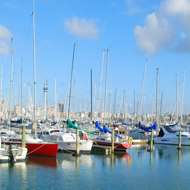 """""""Marina in the City of Sails"""" stock image"""