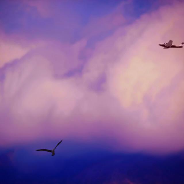"""""""Nubes con avión y ave"""" stock image"""