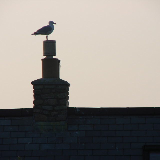 """Seagull chimney"" stock image"