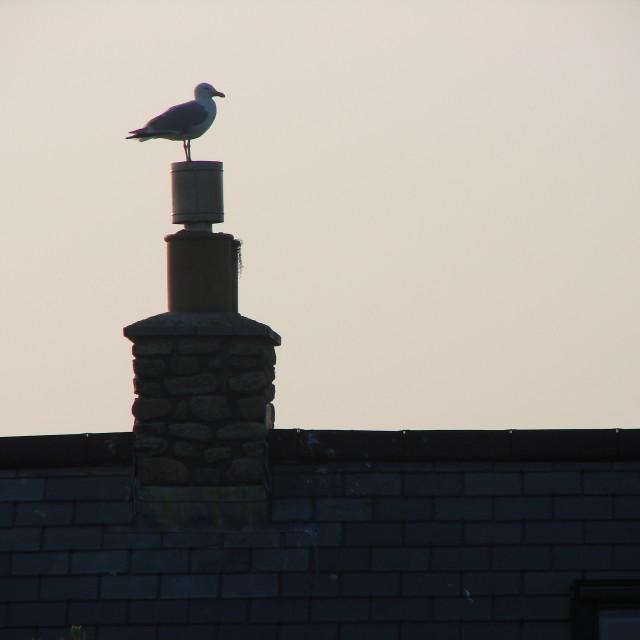 """Seagull chimney"" stock image"