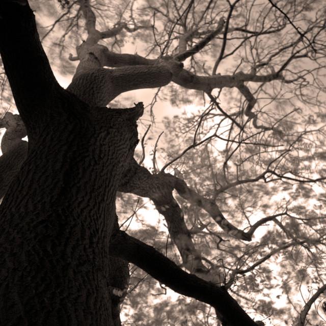 """Creepy Oak"" stock image"
