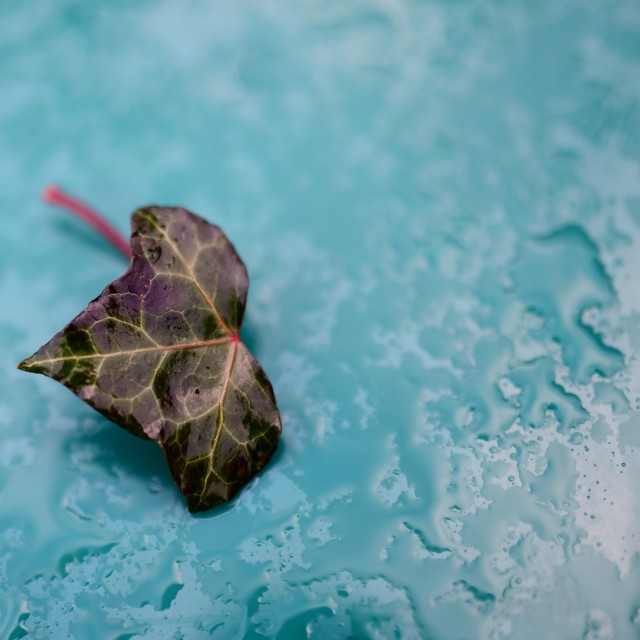 """Slightly sad leaf on a car"" stock image"