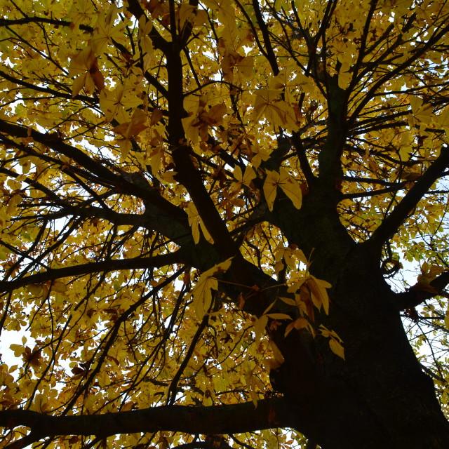 """Yellow Tree"" stock image"