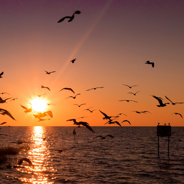 """Sunset Birds - Pine Island Florida"" stock image"