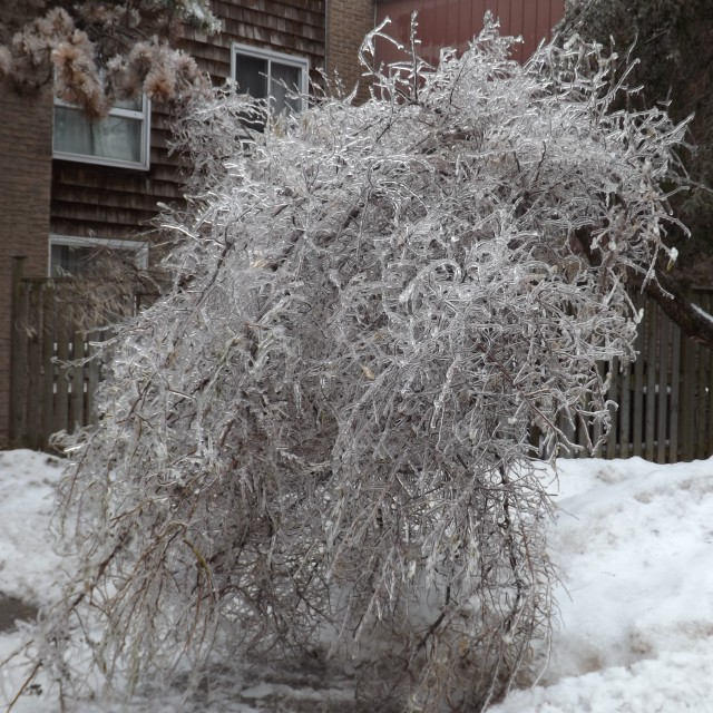 """Ice Storm In Toronto Ontario"" stock image"