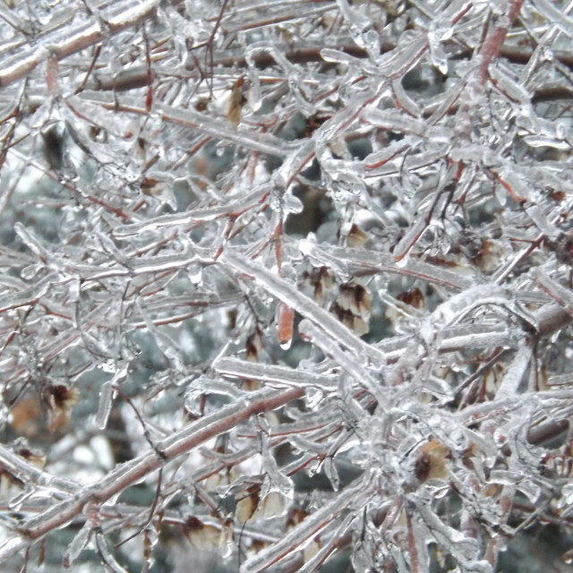 """""""Ice Storm In Toronto Ontario"""" stock image"""