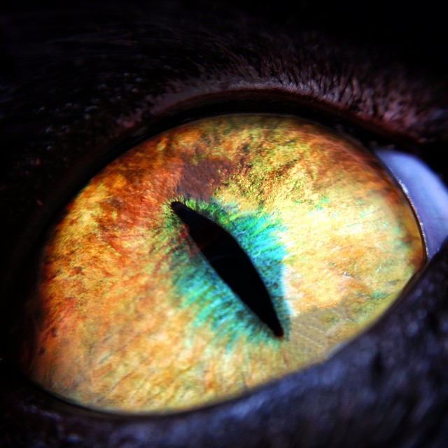 """The Eye"" stock image"