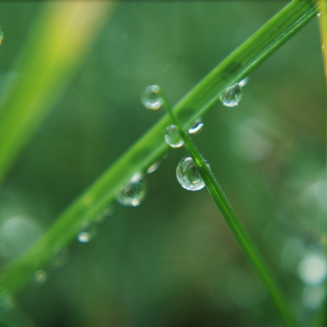 """""""Droplets of dew on blades of grass"""" stock image"""