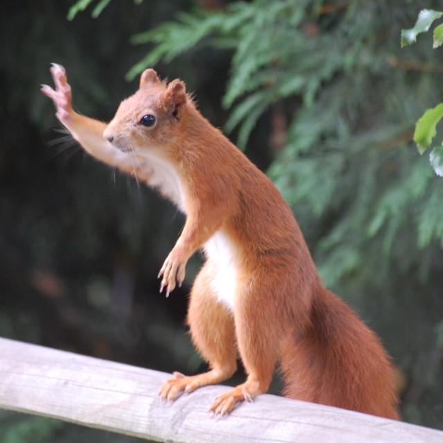 """Hello Squirrel"" stock image"