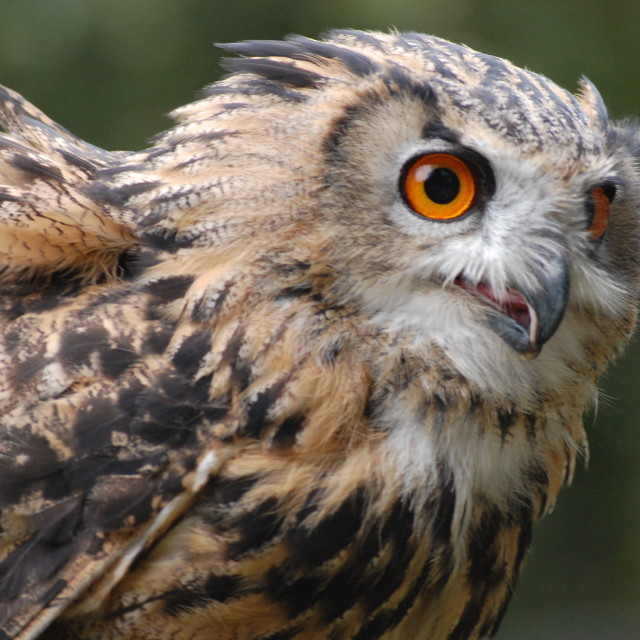 """WIse Owl"" stock image"