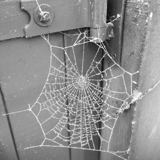 """Frosty Spider Web"" stock image"