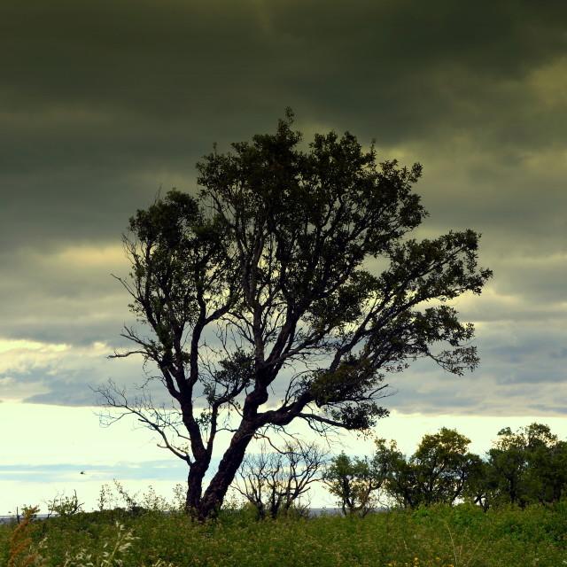 """""""Sardinian Tree"""" stock image"""