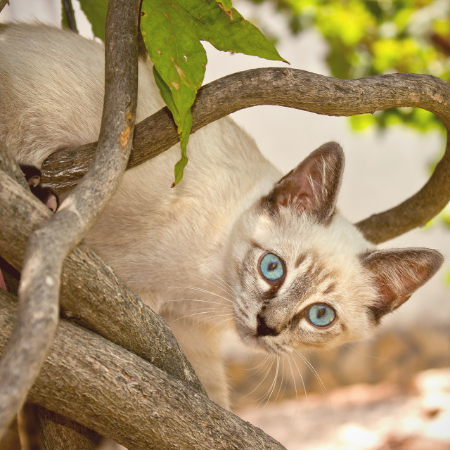"""Cat in a tree"" stock image"