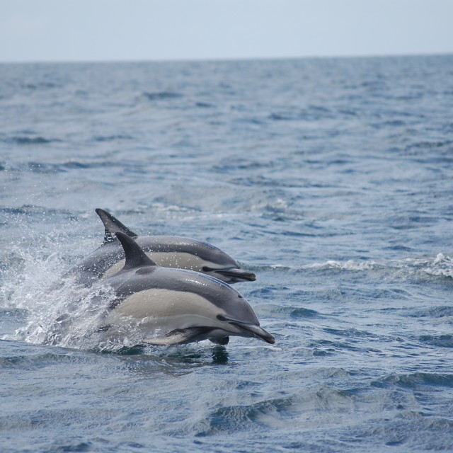 """""""dolphins :)"""" stock image"""