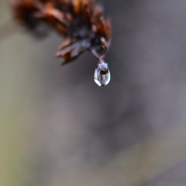 """Raindrop"" stock image"