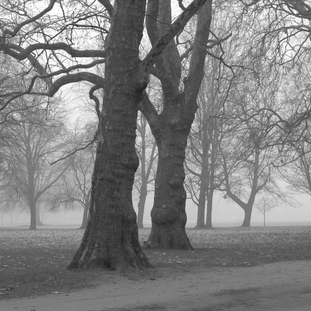 """Hyde Park London"" stock image"