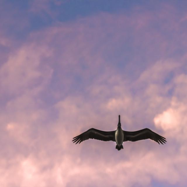 """Bird in Sky."" stock image"