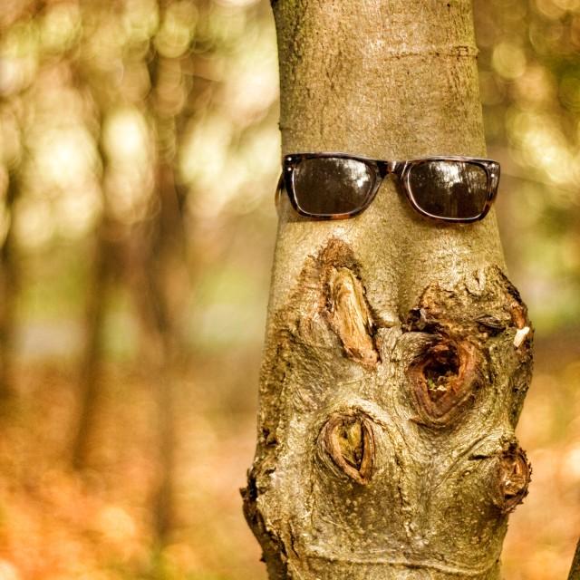 """""""Look who we met in the woods today...."""" stock image"""