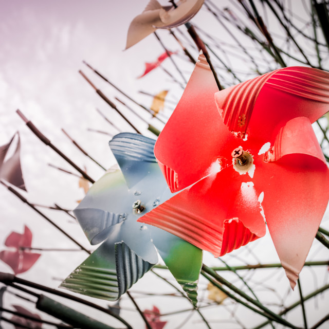 """Pinwheel Tree"" stock image"