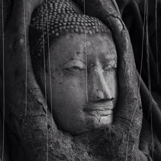 """Head of image buddha."" stock image"
