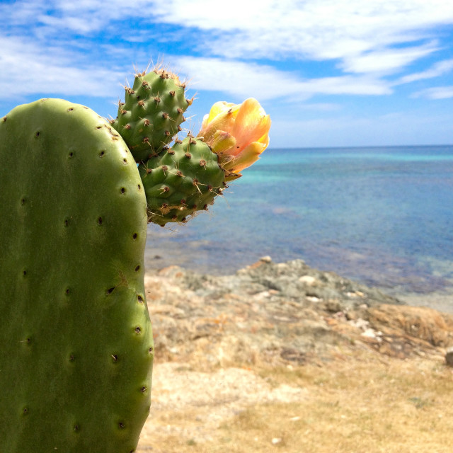 """Cactus by the Mediterranean"" stock image"