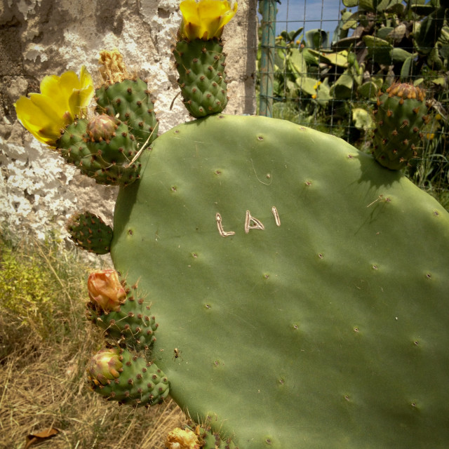 """Cactus with Graffiti"" stock image"