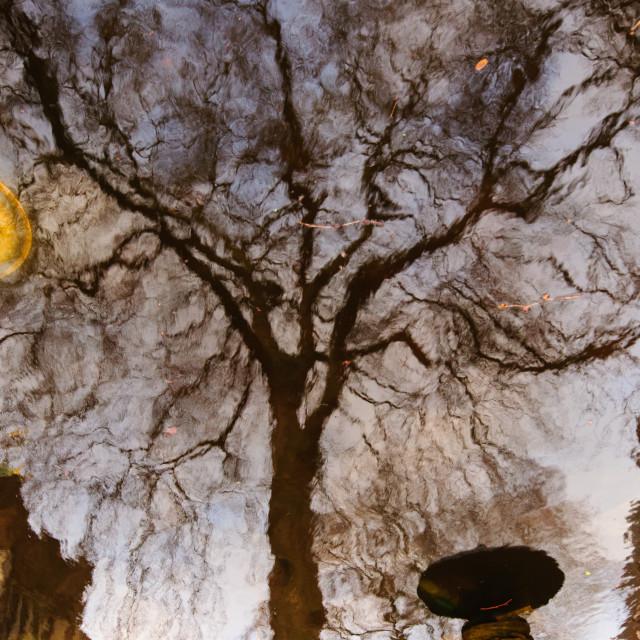 """Underworld tree"" stock image"