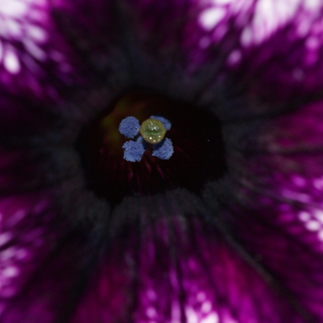 """It's a purple world"" stock image"