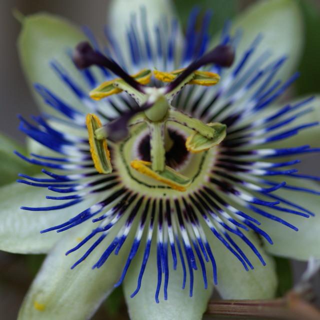"""""""Alien flower"""" stock image"""