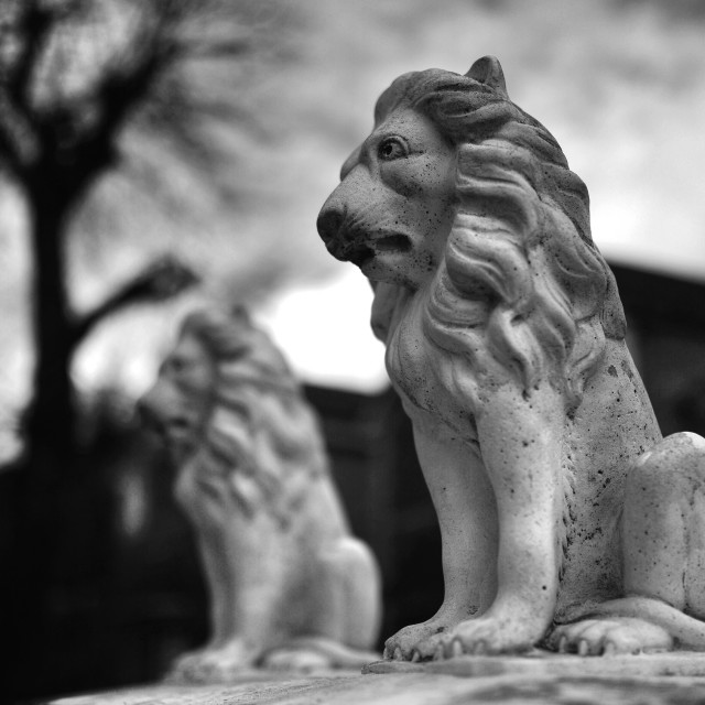 """""""The lion in winter"""" stock image"""